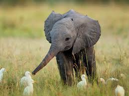 elephantduck